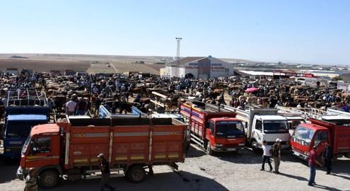 Kırşehir canlı hayvan pazarı yeniden açıldı